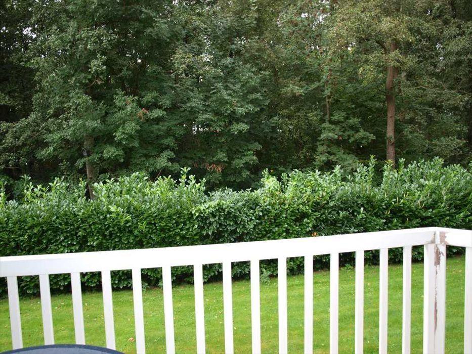 Garten in Sommerpracht
